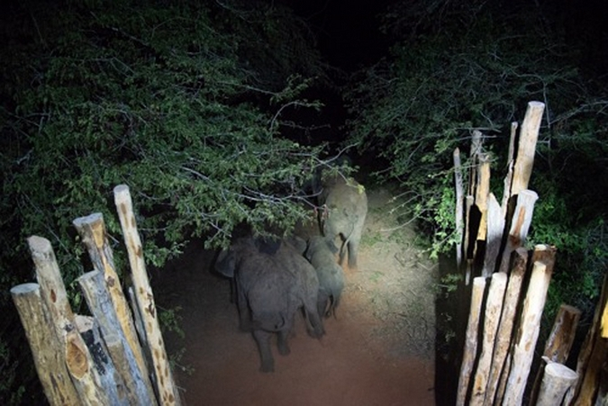 Elephants in Zinave National Park