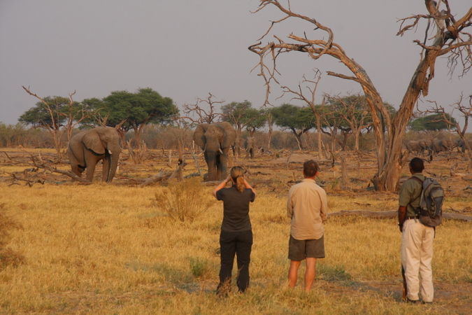 Guests watching two elephants in Moremi Game Reserve
