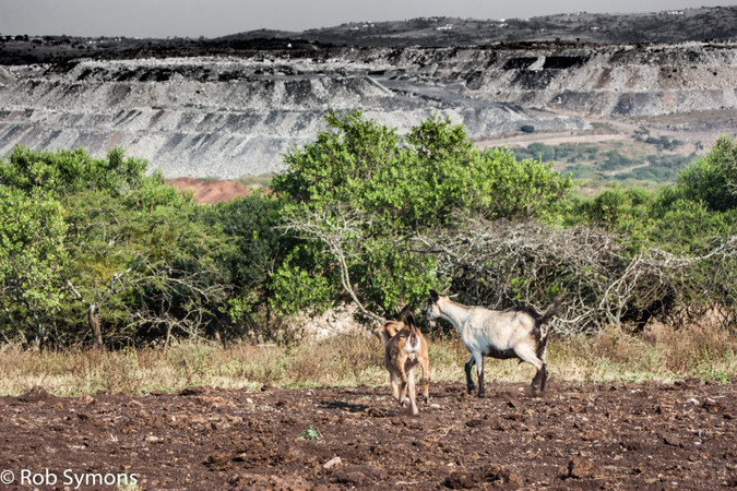Tendele mine with livestock in the foreground