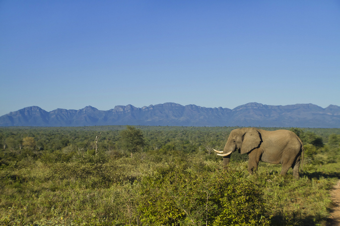 Elephant in the wilderness in Africa