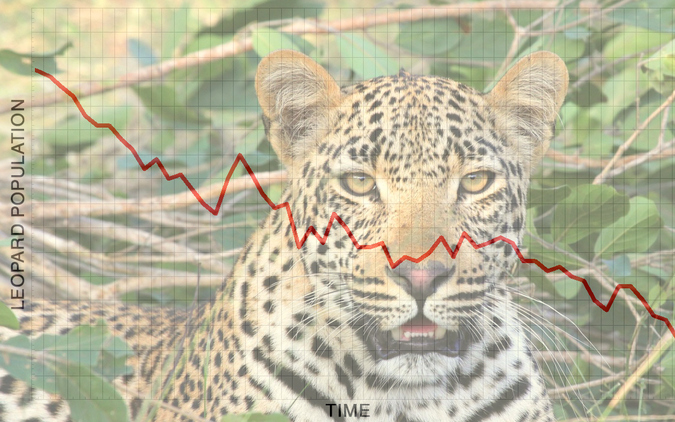 Leopard population decline example graph