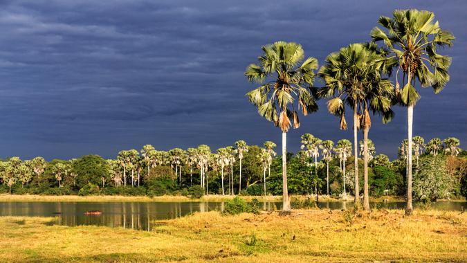 Liwonde landscape