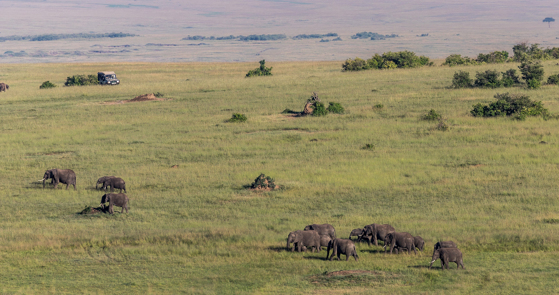 An elephant herd making their way over the plains of the Maasai Mara
