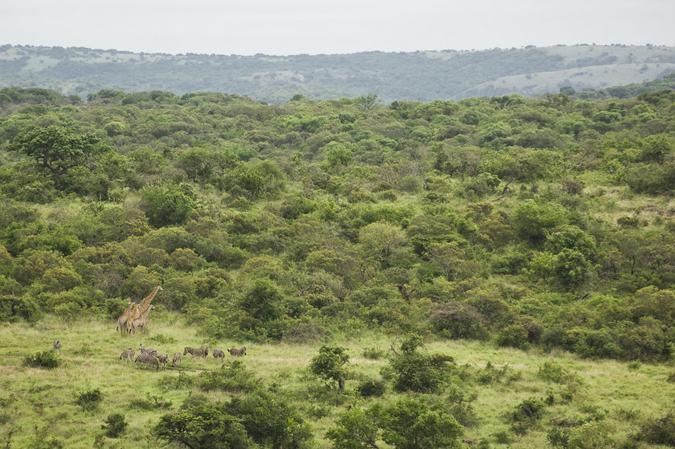 Phinda Private Game Reserve landscape