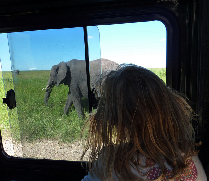 Kid watching elephant while on safari