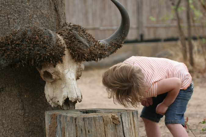 Kid with buffalo skull while on safari