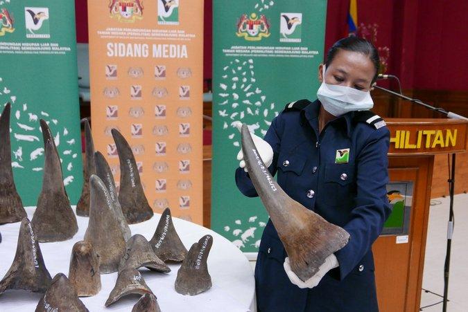 Malaysia makes massive Vietnam-bound rhino horn seizure