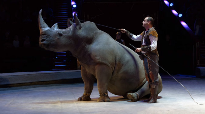 Screenshot showing the white rhino in a Russian circus.