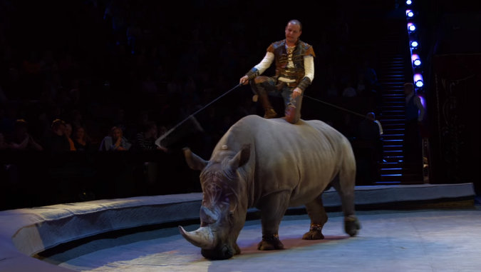Rhino with handler standing on it in Russian circus
