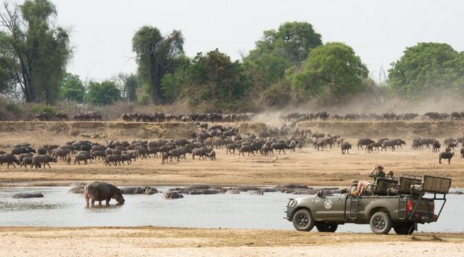 Guests in game drive vehicle watching buffalo in Zambia