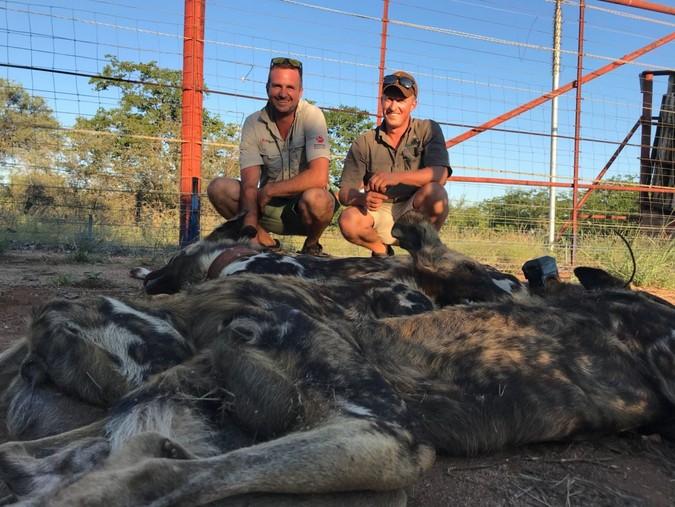 Endangered Wildlife Trust wild dog conservation