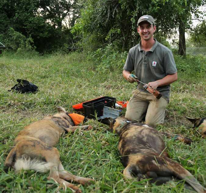 Wild dog conservation