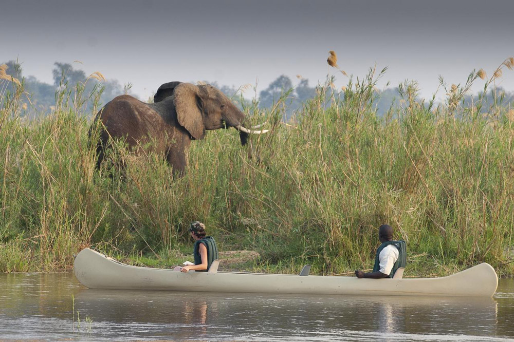 Elephant on the banks of a river with canoe