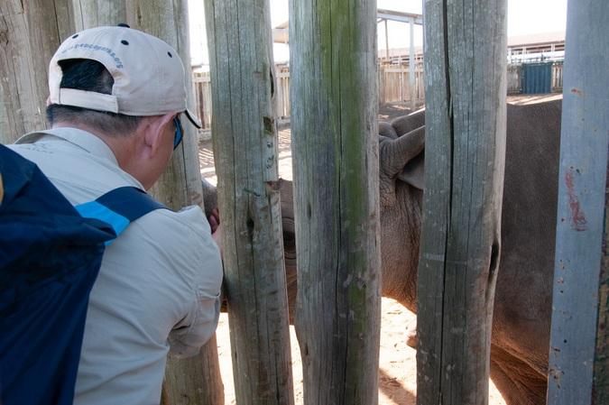 Rhino at a rehabilitation centre