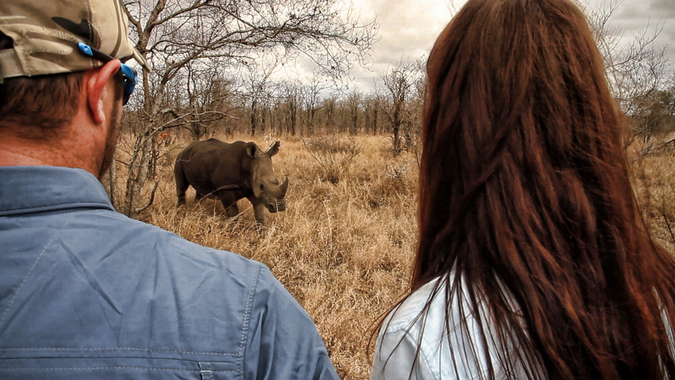 Two people watching a white rhino in the bush