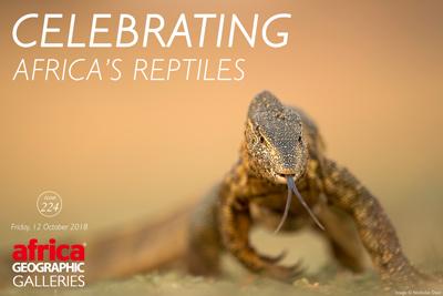 Celebrating Africa's reptiles gallery
