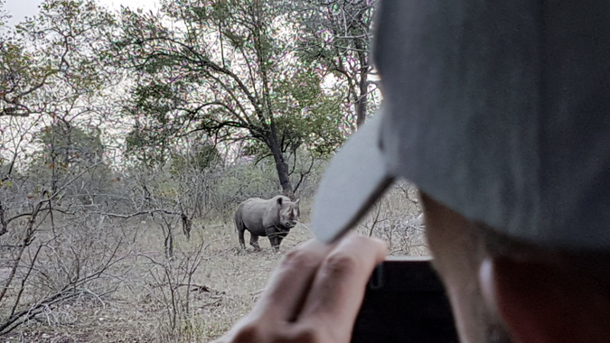Black rhino seen from game vehicle in Malawi with Robin Pope Safaris