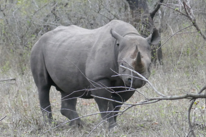 Black rhino seen in Malawi with Robin Pope Safaris
