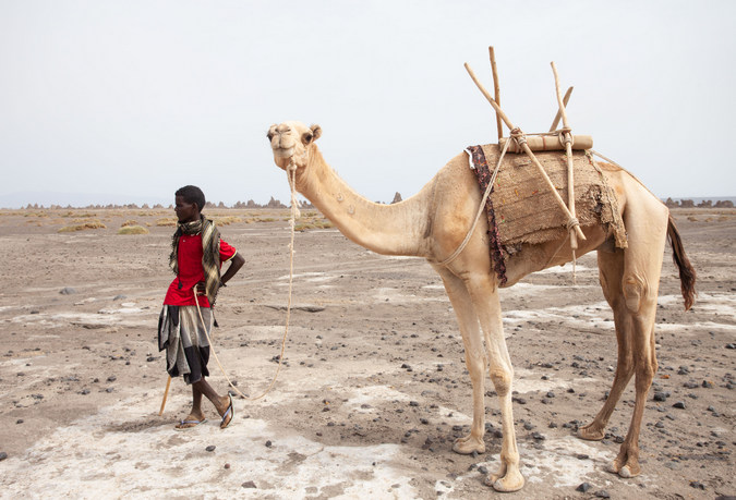 Man and camel in Djibouti