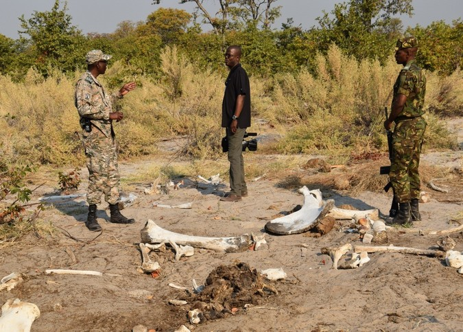Elephant bones in Botswana, with rangers
