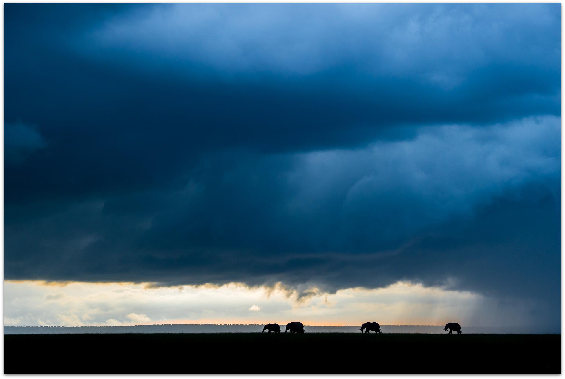 Elephants in the Maasai Mara