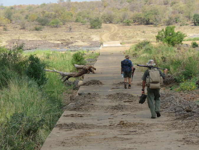Two rangers walking over concrete road in Kruger National Park in South Africa
