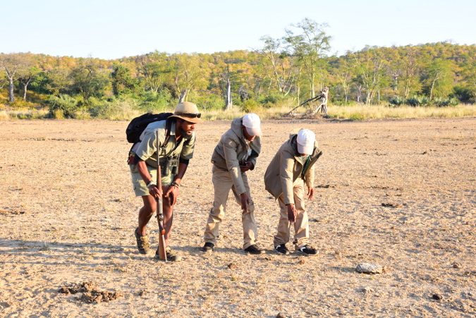 Trackers and guide on a snake spoor in Makuleke Concession