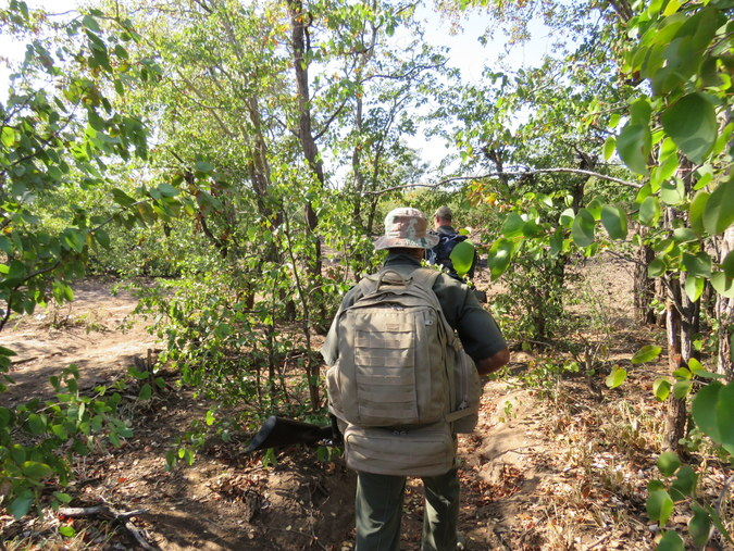 Rangers walking through thick vegetation in Kruger National Park in South Africa