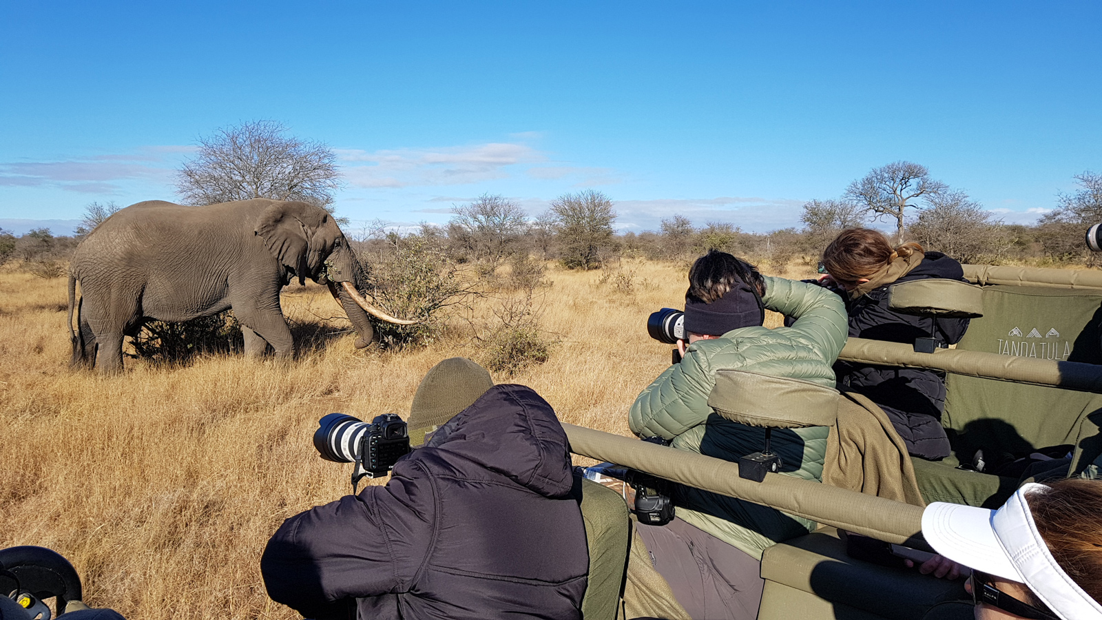 Guests taking photos of large elephant bull in the Kruger