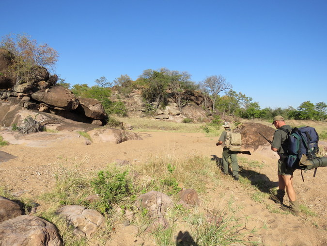 Two field guides walking in Kruger National Park in South Africa