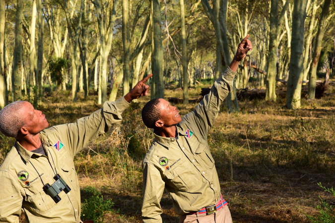 Two trackers birding in the fever tree forest in the Makuleke Concession