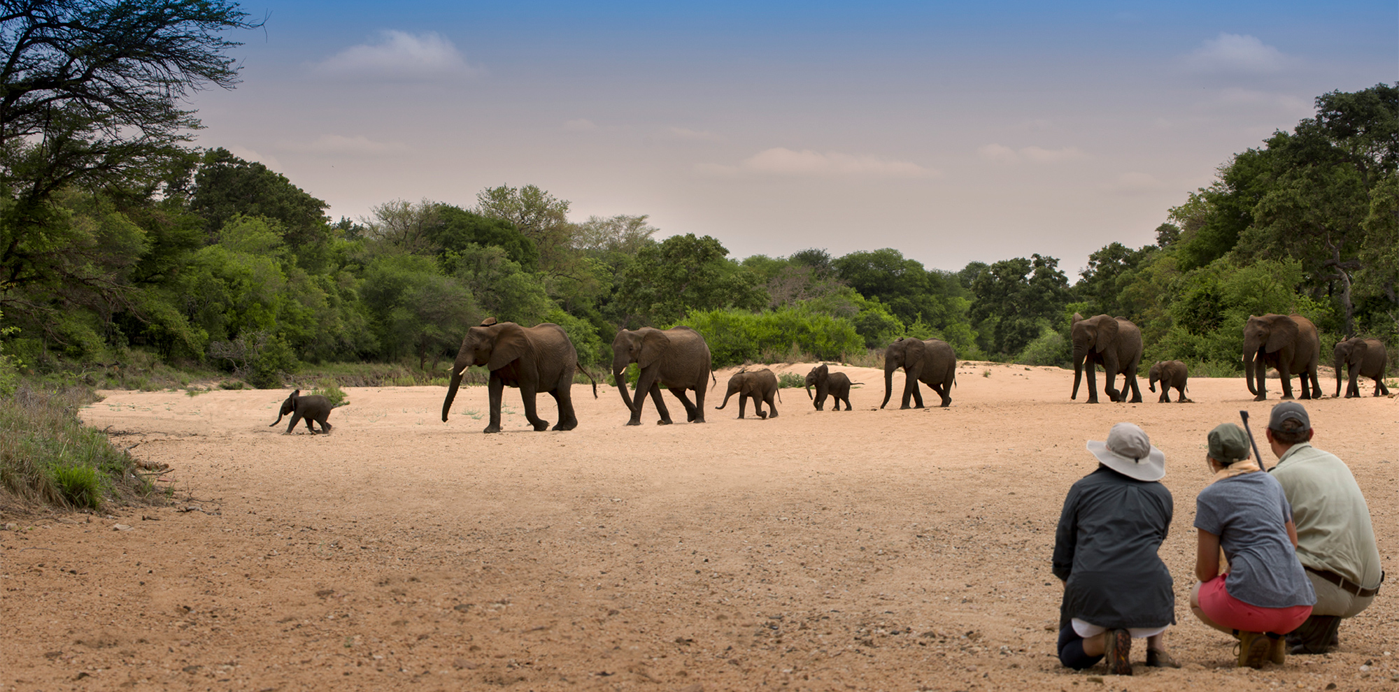 Elephants crossing a dry riverbed with guests watching on