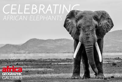 Celebrating African Elephants Gallery