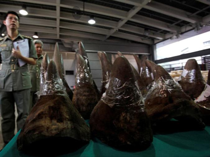 Seized rhino horn shipment