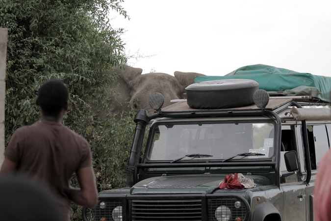 An elephant inspecting safari vehicles in Ruaha in Tanzania