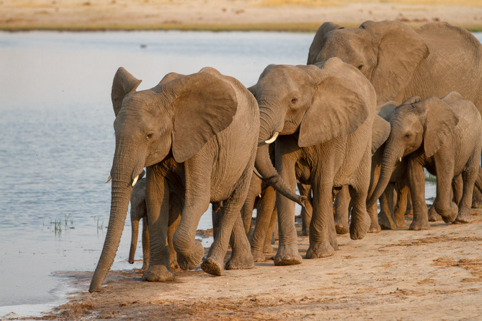 Herd of elephants by waterhole