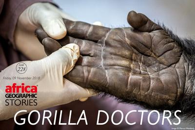 Gorilla Doctors story