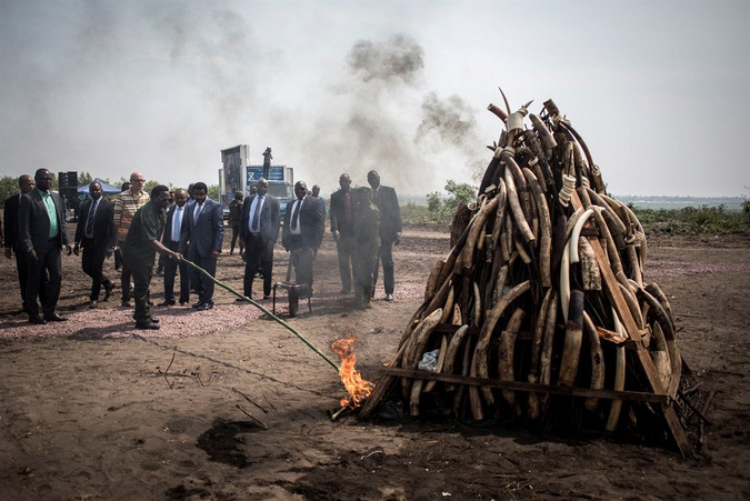 President of the Democratic Republic of the Congo, Joseph Kabila lights a pile ivory