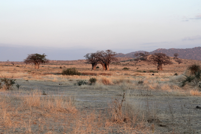 The landscape of Ruaha National Park in Tanzania
