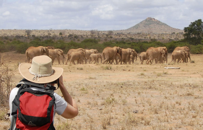 Safari guest photographing a herd of elephants in Kenya