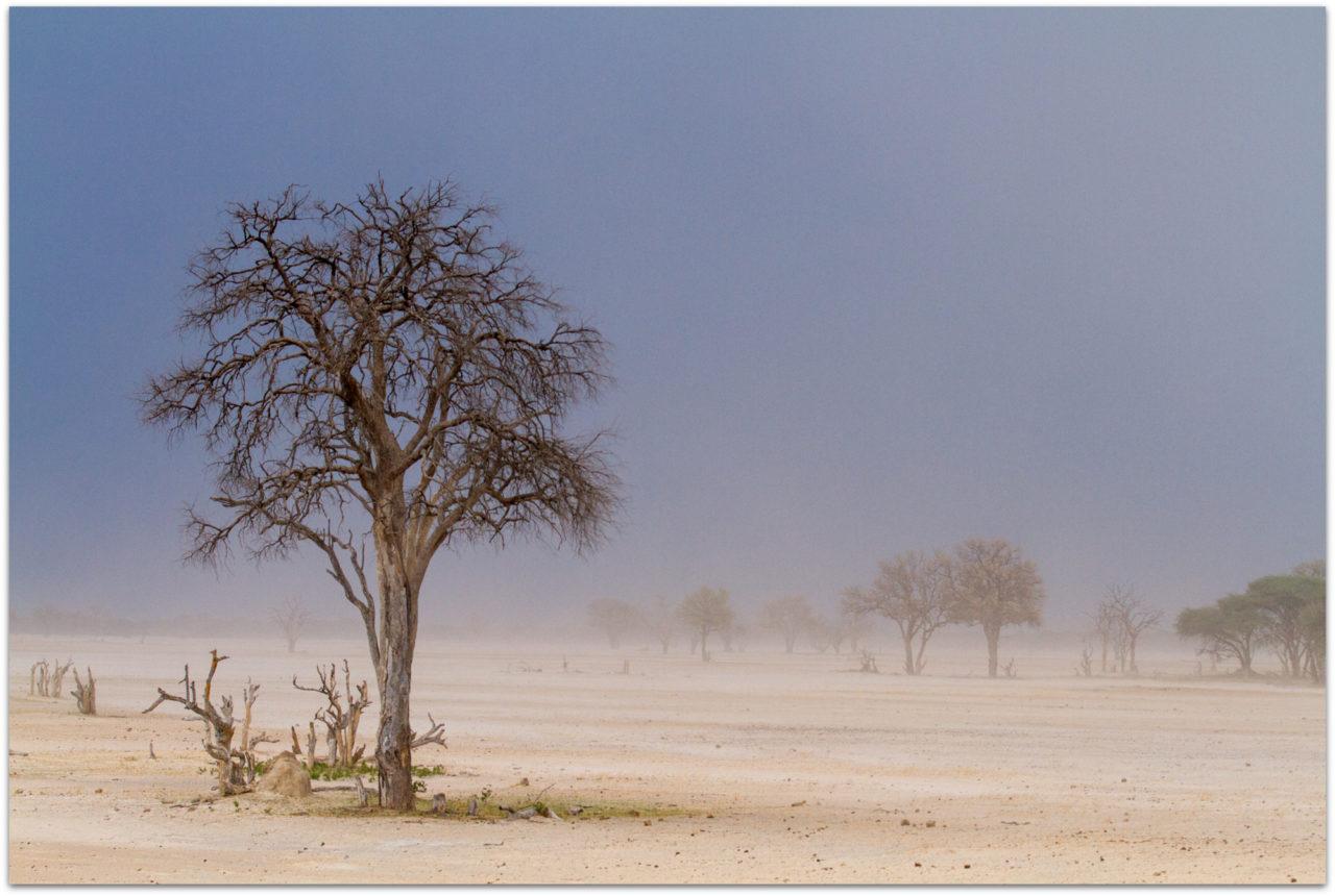 Dry season at Ngamo Plains in Hwange National Park in Zimbabwe