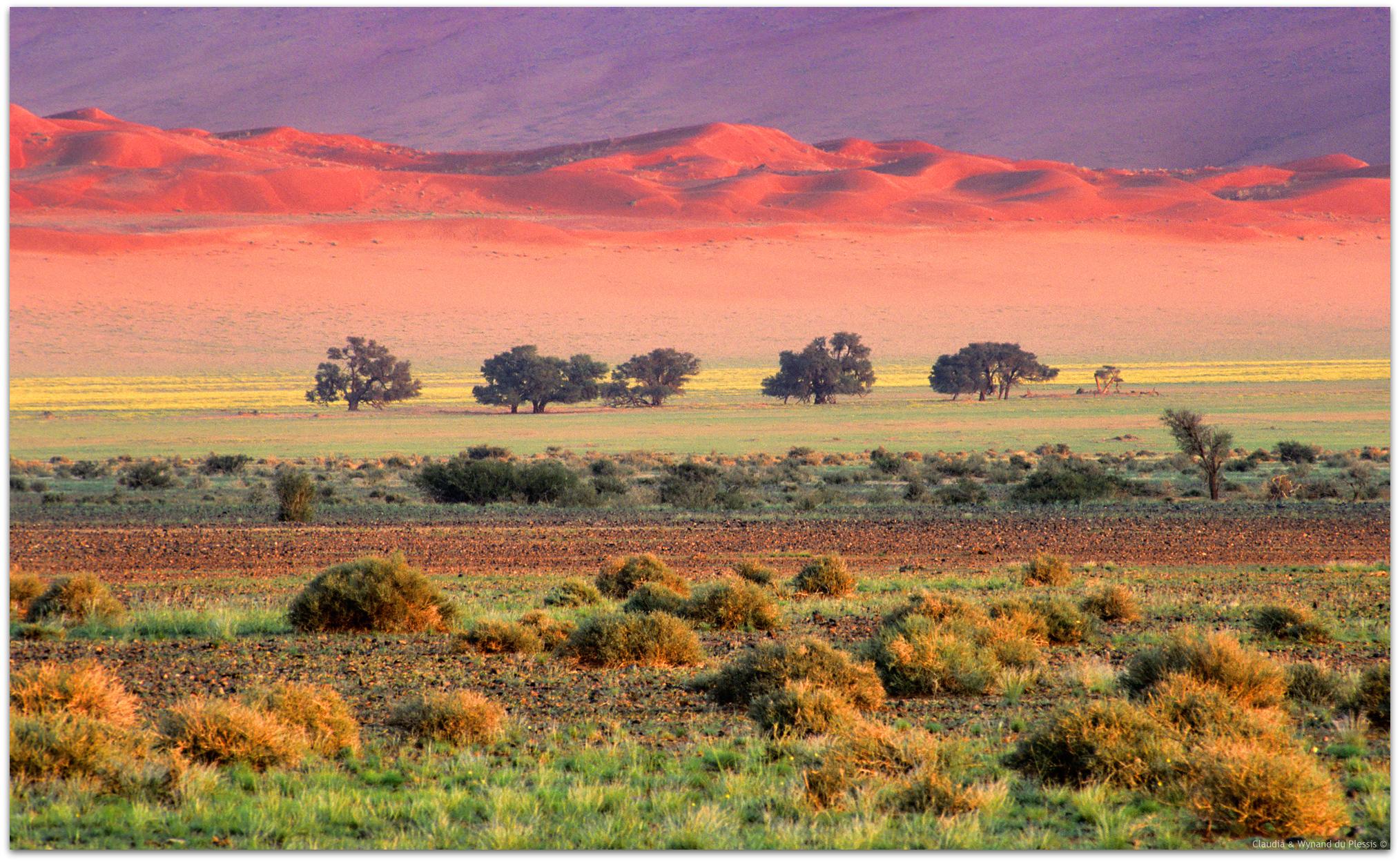 gravel plains west of Sesriem