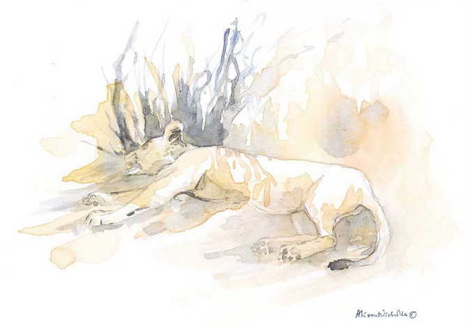 Watercolour painting of lion by Alison Nicholls