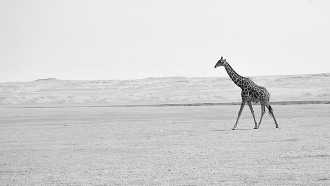 Angolan giraffe © Emma Wells, GCF