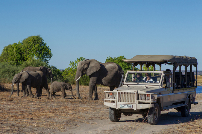 Elephants and game drive vehicle in Chobe