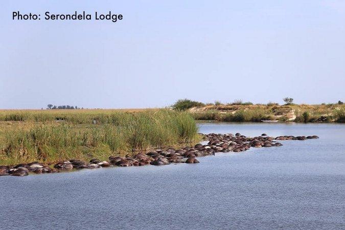 Buffalo carcasses line the Chobe River