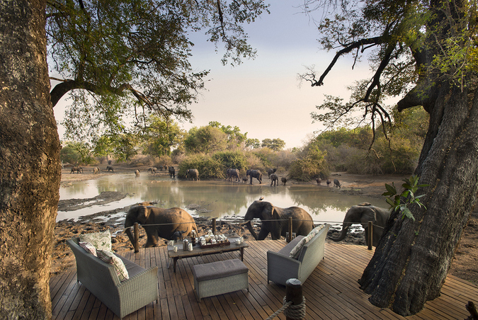 Elephants by a waterhole at Kanga Camp