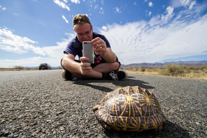 Person taking a photo of a tent tortoise on the road