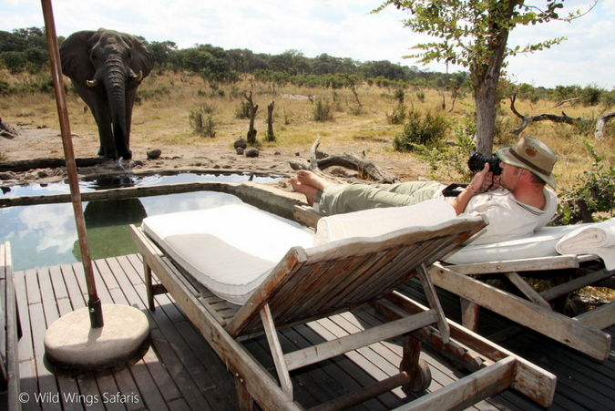 An elephant approaches the pool at Somalisa Camp