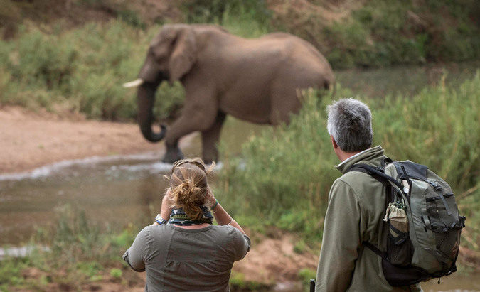 Wildlife viewing in the Kruger National Park